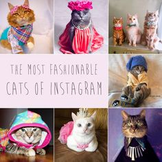 7 Fashionable Cats You Have To Follow On Instagram | Bored Panda