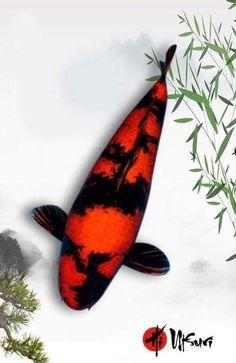 Koi Fish Pond, Koi Ponds, Oscar Fish, Koi Painting, Koi Art, Japanese Koi, Goldfish, Creatures, Kawaii