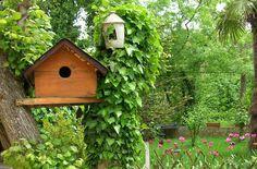 10 ways to be a good neighbor to birds. #birdlover
