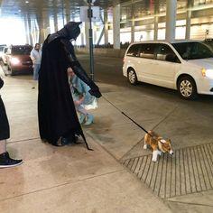 Who needs Robin when you have a corgi? Batman can't control his corgi puppy (Source: http://ift.tt/1F7tr9h)