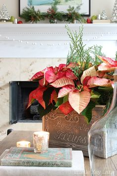 Decorating with poinsettias will add beautiful color to your holiday decor. #poinsettia #christmaspoinsettia #christmasdecor #christmasgreenery #poinsettiasandgreenery #poinsettiaideas #countryfrench Christmas Greenery, Christmas Poinsettia, Very Merry Christmas, Christmas Colors, Christmas Themes, Christmas Crafts, Christmas Decorations, Table Decorations, Holiday Decor