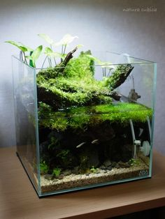 aquascape nature aquarium nano tank