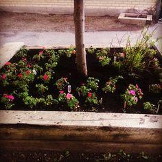 #Instagram @ meghanmullan #kindergarten #flowerbed #school #greenthumb #gobillings