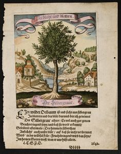 AUTHOR Matthaeus Merian (Matthдus Merian) DATE 1646 | Tree