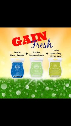 Love the scent of Gain? Fill your whole house with this yummy scent. www.csparks.scentsy.us