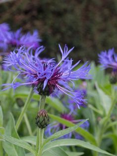 Perennials, Planters, Garden, Flowers, Garten, Planter Boxes, Plant, Flower Pots, Lawn And Garden