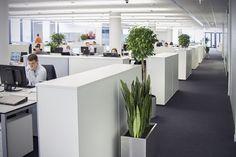Офисное озеленение - индивидуальность и чистый воздух в вашем офисе - Работаем в РБ и РФ - landecor.by