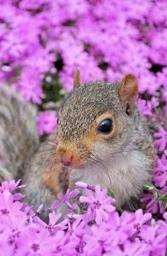 Squirrel & Purple Flowers