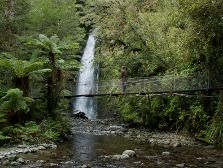 Tranquil forest scenes, day walking on the Hollyford Track. Milford Track, Parks And Recreation, Hiking Trails, Wilderness, New Zealand, Waterfall, National Parks, Walking, Adventure