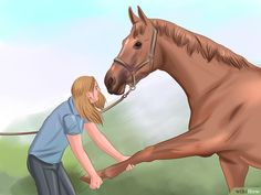 4 Ways to Get Your Horse to Trust and Respect You - wikiHow