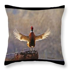 Rooster Ring Neck Pheasant Crowing At Sunrise 1st in a series of Ring Necked Pheasant images