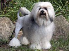 #mostexpensivedogs read more https://wondertabloid.com/most-expensive-dog-breeds/