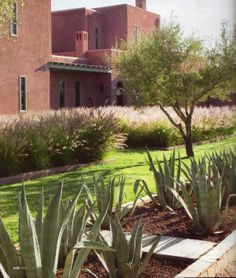 Morocco:  Agave plants & olive trees provide a foil for the pinky colour of the house & shimmering grasses create a sense of movement through the garden