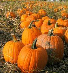 Family fun at Wagner Farm's Pumpkin Patch | Read more in Bill & Carolyn's Insider Guide to New Mexico