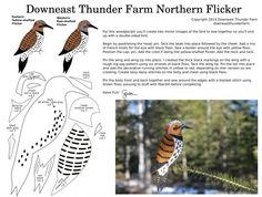 When readers suggested that I create a northern flicker, I didn't know where to begin. Although they're native to this neck of the woods, I've never seen one. With this pattern, y… Felt Christmas Decorations, Felt Christmas Ornaments, Handmade Ornaments, Christmas Ideas, Felt Patterns, Bird Patterns, Fabric Birds, Felt Fabric, Bird Crafts