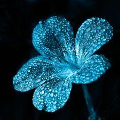 ɛïɜ Blue Flower ɛïɜ