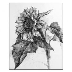 Artist Lane Sunflower by Olena Kosenko Painting Print on Wrapped Canvas Painting Prints, Canvas Prints, Art Prints, Sunflower Canvas Paintings, Floral Paintings, Botanical Illustration, Illustration Art, Botanical Art, Sunflower Quilts