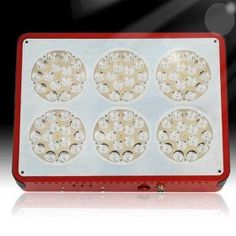 The red wavelength for plants budding and blossoming and fruiting, blue wavelength for plants photosynthesis and keep growing steadily. Led Grow Lights, Photosynthesis, Growing Plants, Hydroponics, Apollo, Spectrum, South Africa, Apollo Program