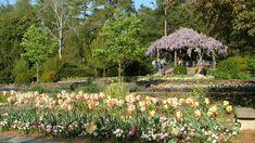 Explore Duke Gardens. #VacationBIG