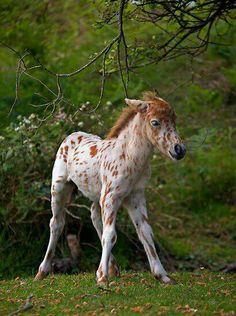 <3 <3 Cute little baby poneeeeeeeeeee