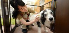 """""""O Grito do Bicho"""": No Japão, até animais de estimação batem recorde d..."""