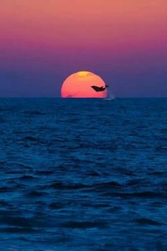 Dolphins the way they should be...free! www.facebook.com/loveswish