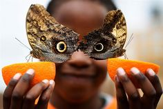 As 25 melhores fotos de 2016 -  Um menino de 5 anos com suas borboletas (Inglaterra)