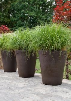 Love the idea of the tall pots along the fence with plants for Tall ornamental grasses for pots