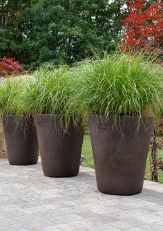 Ornamental grasses in Poterie de la Madeleine.  Garden design: Winston Flowers. Photo credit: Rosemary Fletcher.