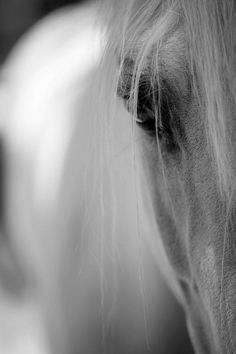 eyes tell us all. All The Pretty Horses, Beautiful Horses, Animals Beautiful, Horse Photos, Horse Pictures, Equine Photography, Animal Photography, All About Horses, Majestic Horse
