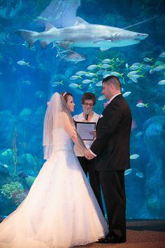 Coral Reef Room Weddings