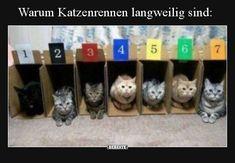 Warum Katzenrennen langweilig sind..   Lustige Bilder, Sprüche, Witze, echt lustig