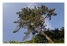 Serralves [2013 - Porto / Oporto - Portugal ] #fotografia #fotografias #photography #foto #fotos #photo #photos #local #locais #locals #paisagem #paisaje #landscape #paisagens #paisajes #landscapes #europa #europe #natureza #naturaleza #nature #jardim #jardins #jardin #jardines #garden #gardens #arvore #arvores #arbol #arboles #tree #trees @Visit Portugal @ePortugal @WeBook Porto @OPORTO COOL @Oporto Lobers