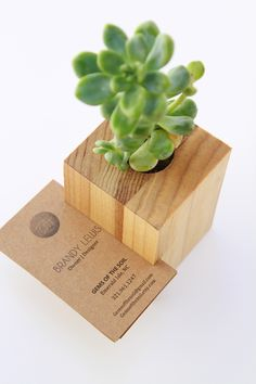 Business card display and succulent holder duo by Gems of the Soil.