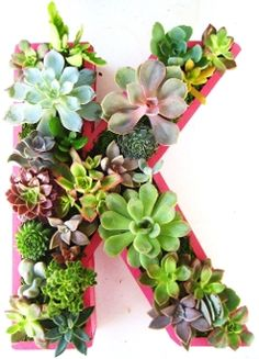 amazing succulent wall arrangement - ooh, it's MY intitial; gotta do it if I can find a sunny-enough spot.