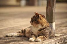 春うららかな陽気になった昼休みに堪能する猫の画像集 : 〓 ねこメモ 〓.