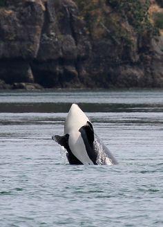 Washington State, Whale Watching