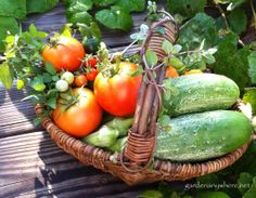 August 14, 2013 from our Garden Anywhere Box