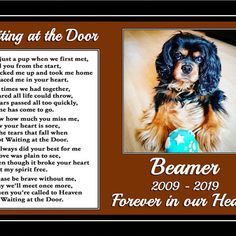 Your place to buy and sell all things handmade Pet Quotes Dog, Cat Poems, Dogs Golden Retriever, Retriever Dog, Patterdale Terrier, Pet Sympathy Cards, The Beautiful South, Bereavement Gift, Boston Terrier Dog