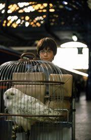 Harry Potter - Galeria de Fotos, imagenes, fotografias, pelicula, personajes