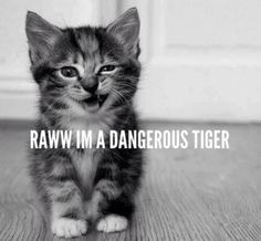 tygercat