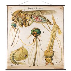 Vintage French School Chart (Fly)  $650