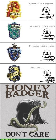 Honey badger runs hufflepuff in harry potter Harry Potter Love, Harry Potter Universal, Harry Potter Fandom, Harry Potter Memes, Harry Potter World, Harry Potter Houses Traits, James Potter, Sirius Black, Hufflepuff Pride