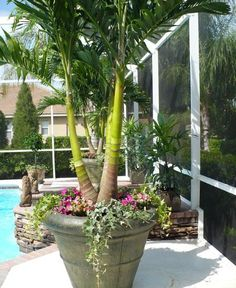 Tropical Landscape Design, Pictures, Remodel, Decor and Ideas - page 46