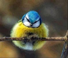 bird - Share cute