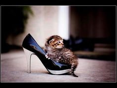 Who says animals and fashion can't go together.