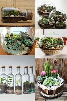 Terrários: ideia prática para sua casa ter plantinhas | Blog Helena Mattos