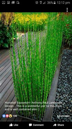 , Using Architectural Plants in the Garden - Tips & Ideas! Horsetail reed (grown the right way) is a great way to add structure to your garden! , Using Architectural Plants in the Garden Modern Landscaping, Backyard Landscaping, Modern Patio, Modern Planters, Garden Modern, Landscaping Ideas, Backyard Ideas, Landscaping Software, Contemporary Gardens
