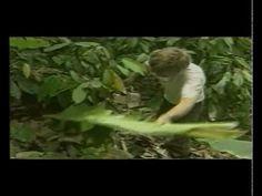 Aula prática completa de Agrofloresta com o Mestre Ernest