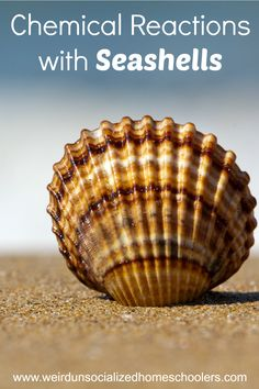 Chemical Reactions with Seashells